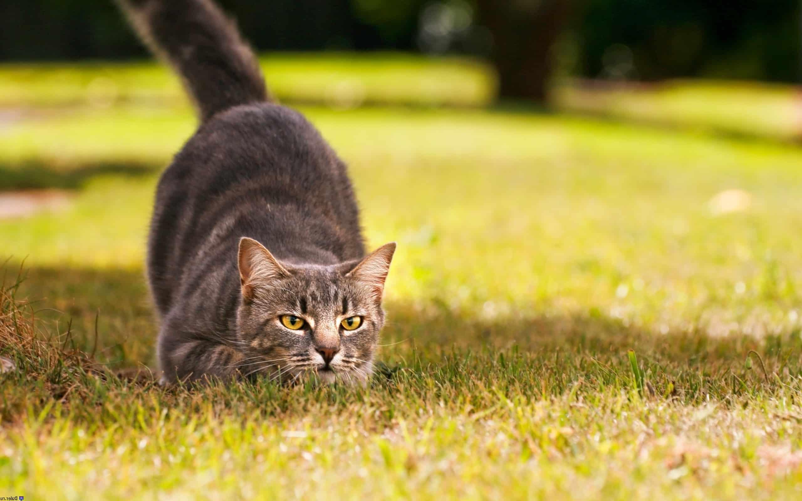 Как охотятся кошки, Про Друга