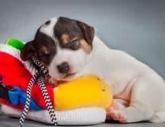 Почему собака не играет с игрушками?
