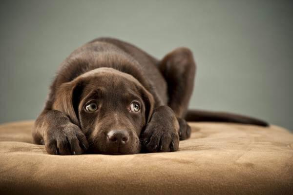 Собака боится незнакомых людей — что делать?