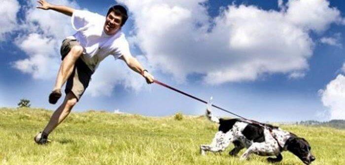 Собака, увлечённая игрой, не реагирует на хозяина
