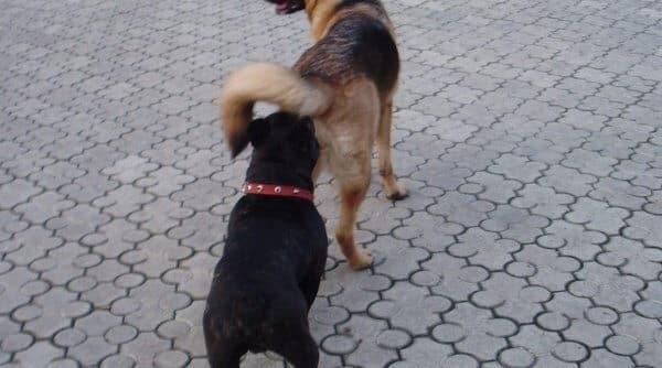 Почему собаки нюхают друг друга?