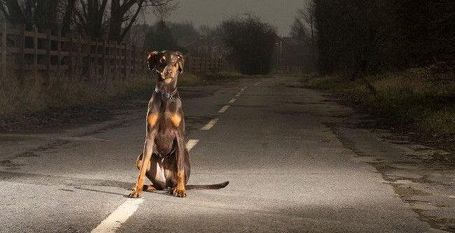 Собаку сбила машина - первая помощь