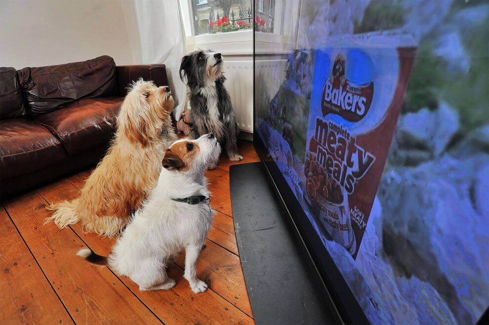 Собак лает на телевизор