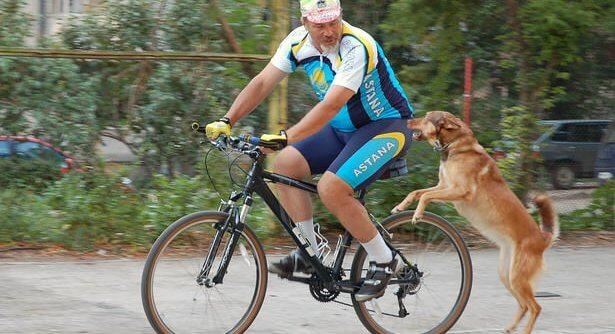 Собака кидается на машины и велосипеды