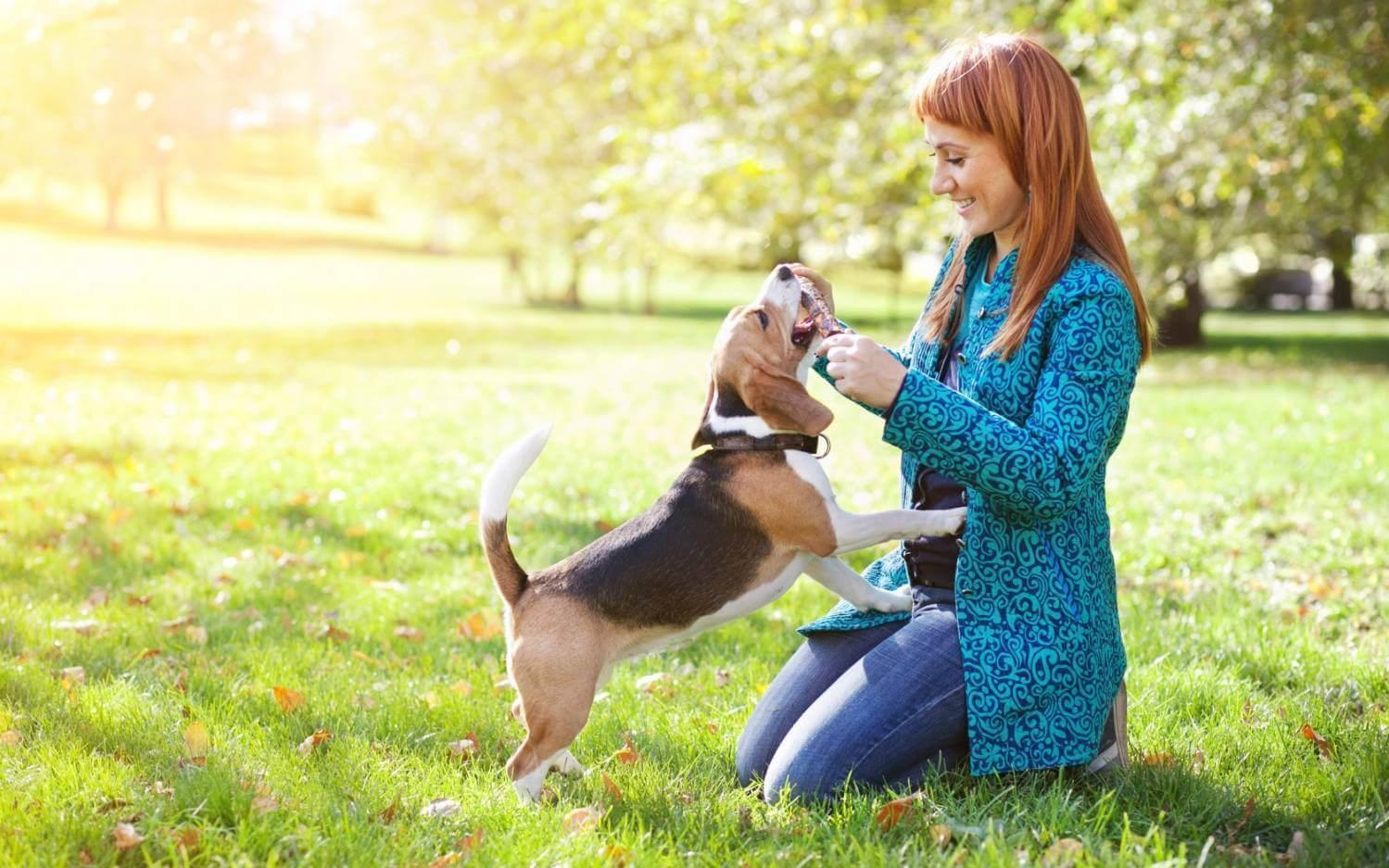 Можно ли строго воспитывать собаку