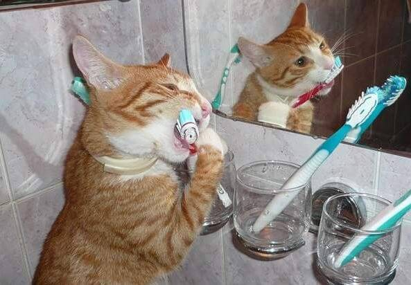 Гигиена кошки