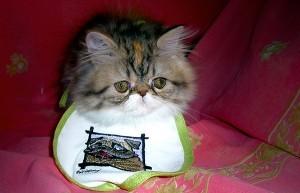 Как правильно кормить котенка?