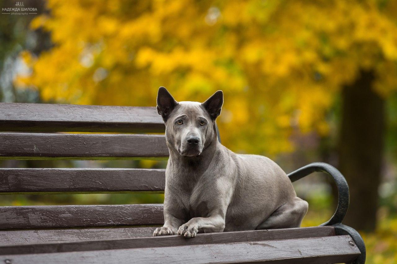 Начинающим собаководам