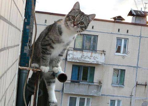 Кошка упала