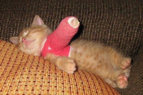 Переломы у кошек
