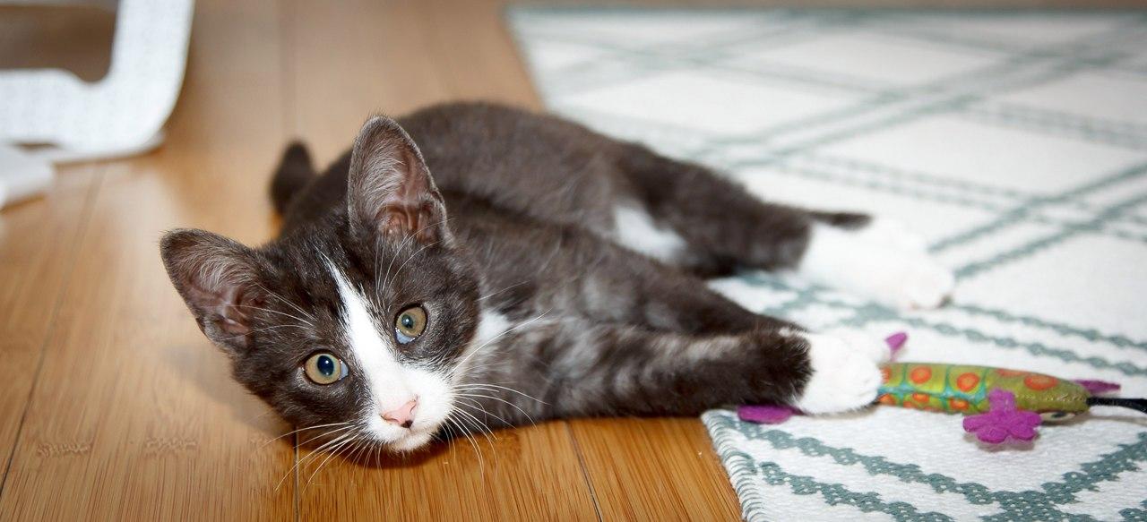 Ушибы у кошек