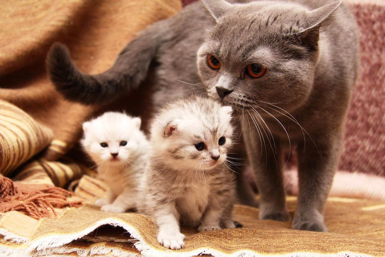 Ваша кошка беременная Как и чем правильно кормить беременную кошку