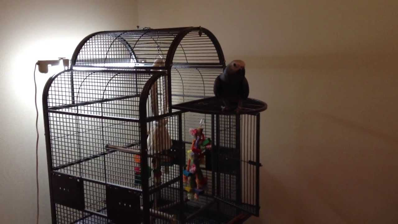 Лампы для попугаев