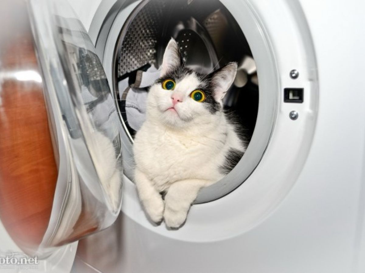 Бытовые опасности для кошек