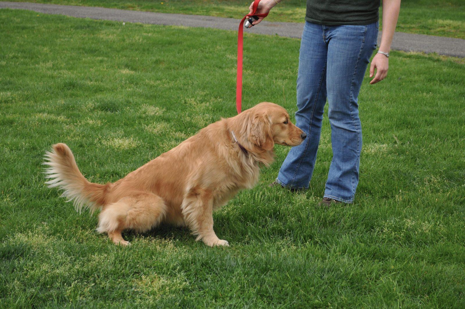Нужно ли убирать за собакой на улице?