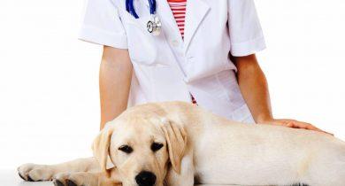 Стоит ли стерилизовать собаку?