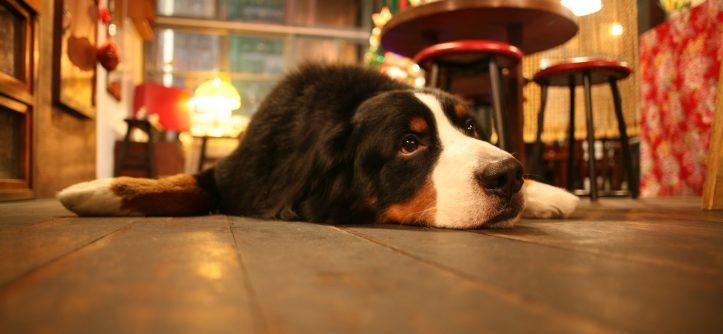 Безопасность собаки в доме