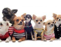 зачем собаке одежда