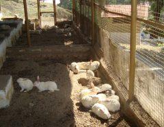 Сарай для кроликов своими руками