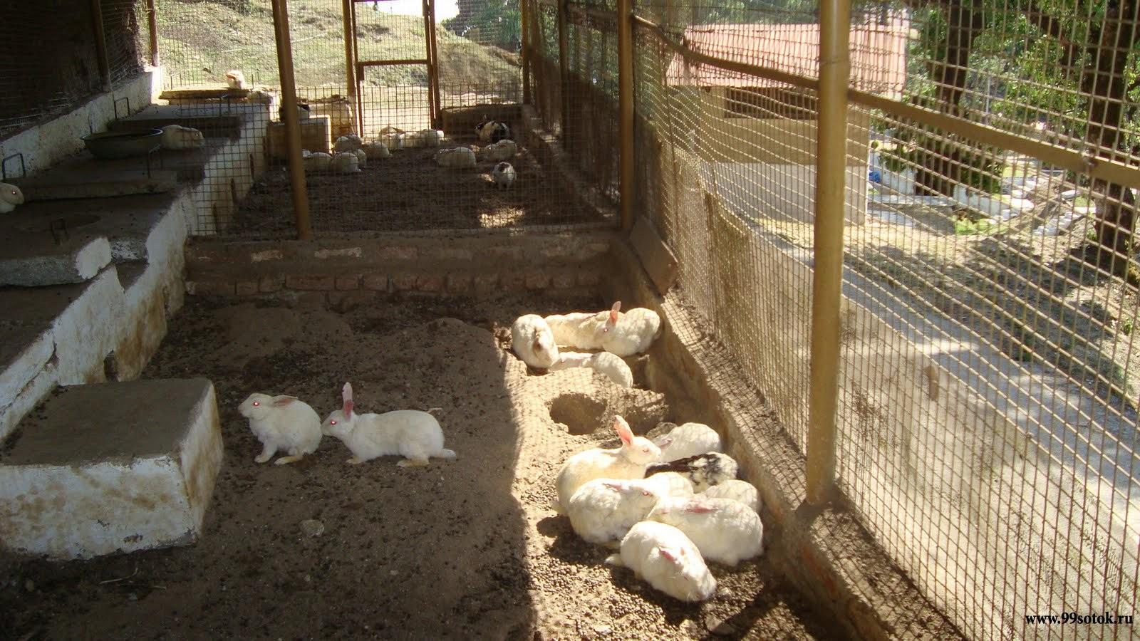 Сарай своими руками для кроликов