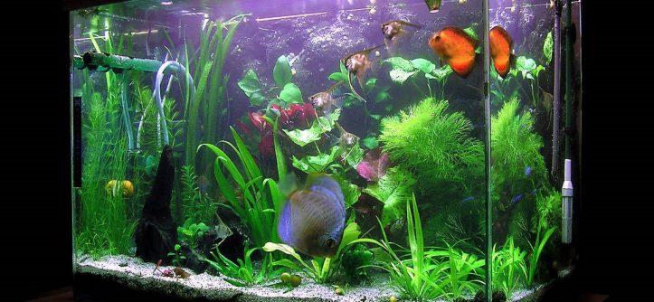 Пресноводный аквариум секреты удачного запуска