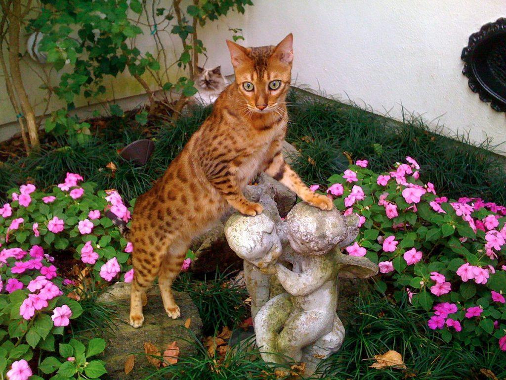 Язык тела кошек