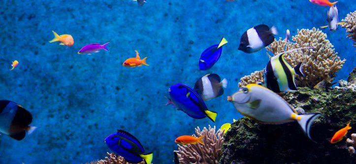 Причины заболевания аквариумных рыбок