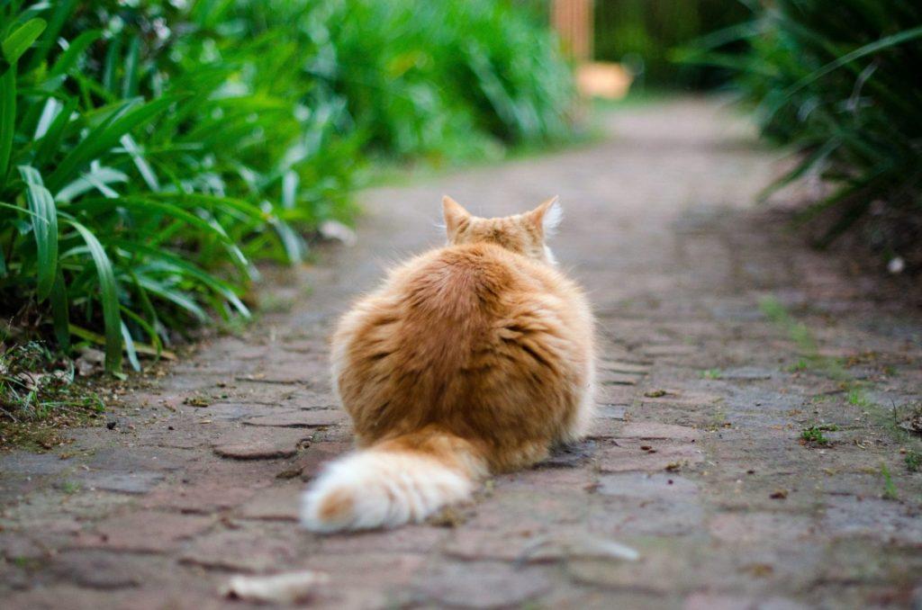 Язык кошачьего хвоста