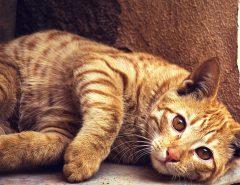 Кошка на воле