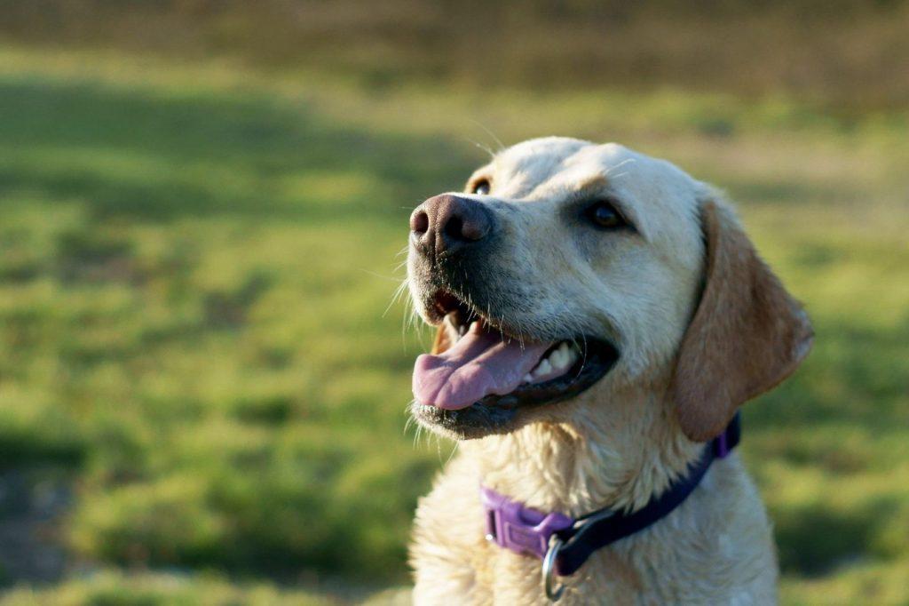 Как подобрать ошейник и поводок для собаки