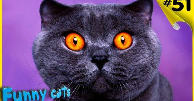 Смешные коты и кошки Приколы с котами и кошками