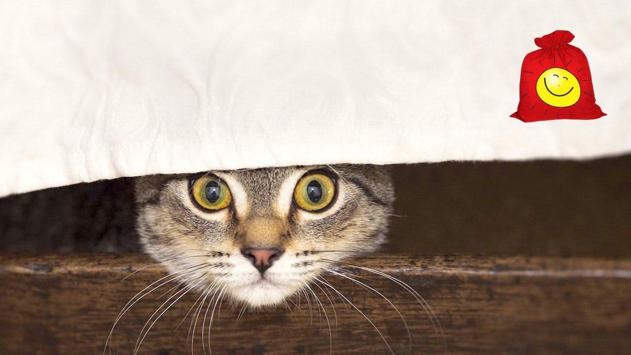 Смешной кот Масик