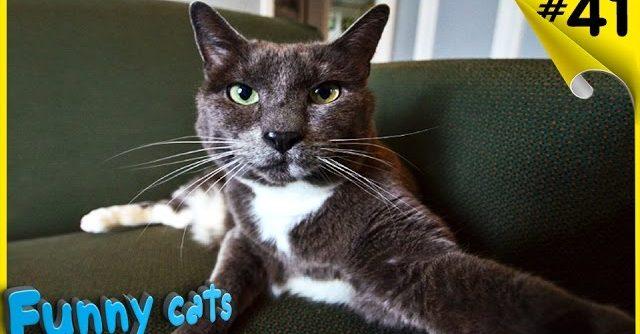 Смешное видео с кошками Смешные кошки Смешные коты