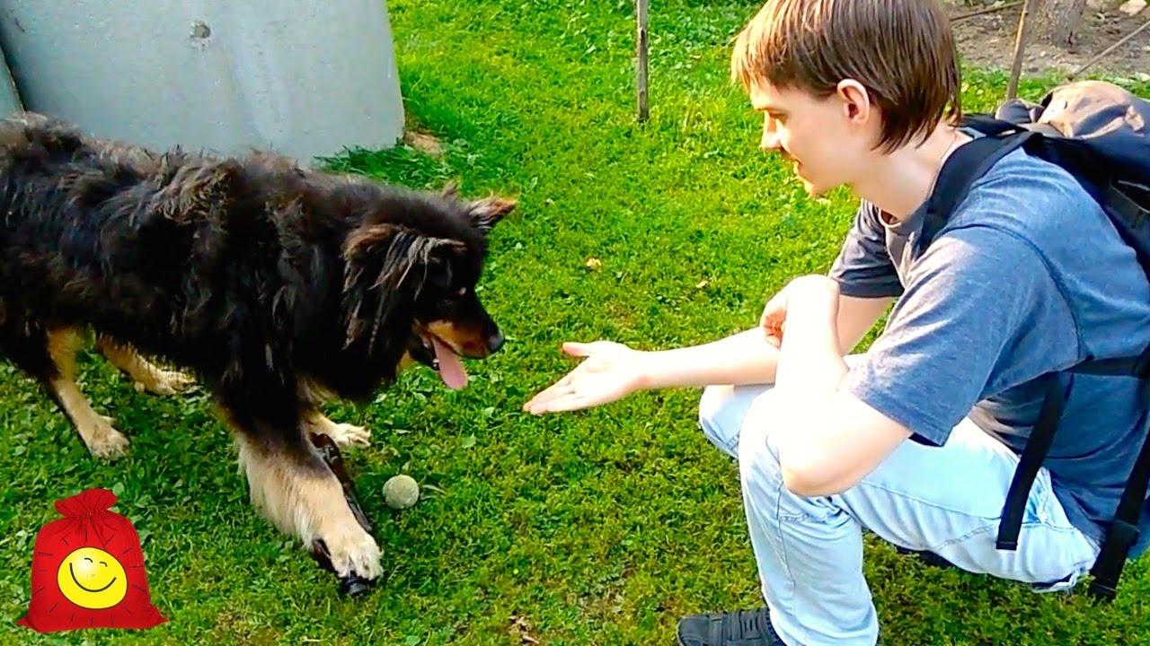 Жадная собака. Позитивный пёс