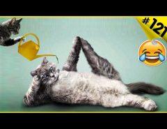 Смешные кошки приколы про кошек и котов 2018 #121 (Видео смешные коты - Приколы с котами)