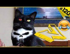 Смешные кошки приколы про кошек и приколы котов #120 (Топовая подборка 2018)